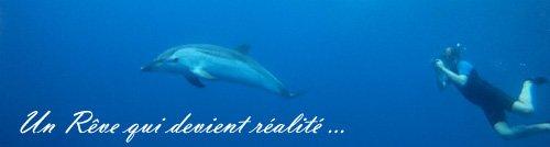 Nager avec les dauphins en pleine mer lorsque le r ve for Nager avec les dauphins nice
