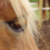romance-equestre