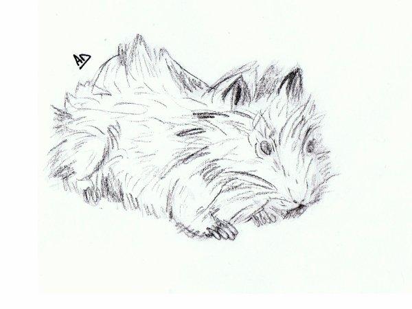 Articles de blid lie tagg s cochon d 39 inde bd lilie - Comment dessiner un cochon d inde ...