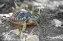 Photo de les-tortues-de-terre