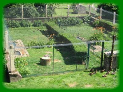 Parc canards les folies du colvert - Bassin canard d ornement pau ...