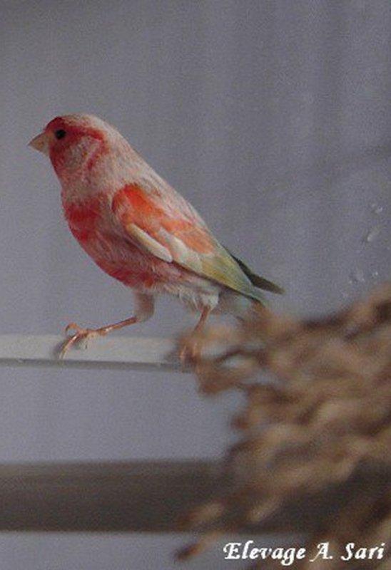avis de vente d'oiseaux