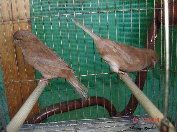 Acquisition d'oiseaux