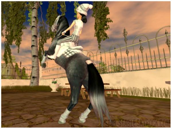 Une journ�e avec mes chevaux #1