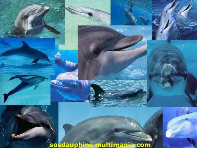 jolies-dauphins100