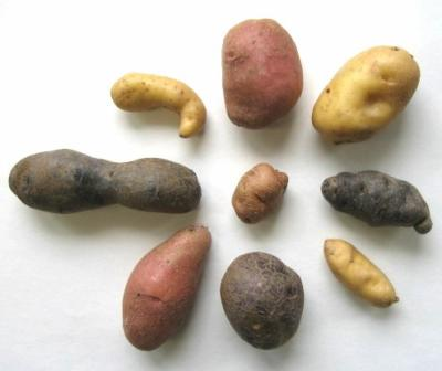 il existe plusieurs sortes de pomme de terre ma passion pour les pommes de terre. Black Bedroom Furniture Sets. Home Design Ideas