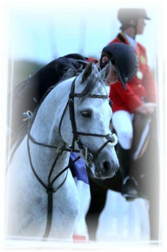 poneys-de-sport