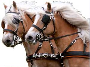 oOo-chevaux-oOo