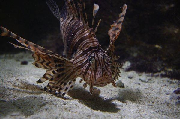 aquarium d amn 233 ville photographiejust