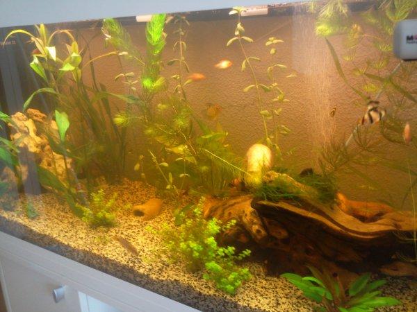 Voici mon aquarium ferplast dubai 200 L   P u00e8che en mer 2