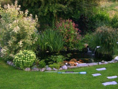 Bassin plant ma onnerie pavage et tout ce qui concerne le - Plante oxygenante pour bassin ...