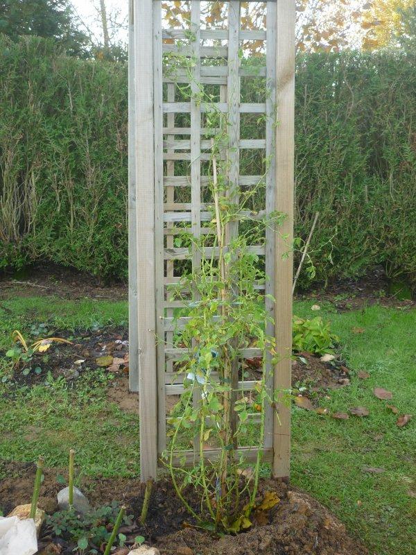 Quelles grimpantes pour le jardin vite au jardin - Arche pour rosier grimpant ...