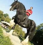 le plus grand cheval du monde 100 la courneuve. Black Bedroom Furniture Sets. Home Design Ideas